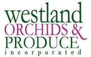 Westland Orchids's picture