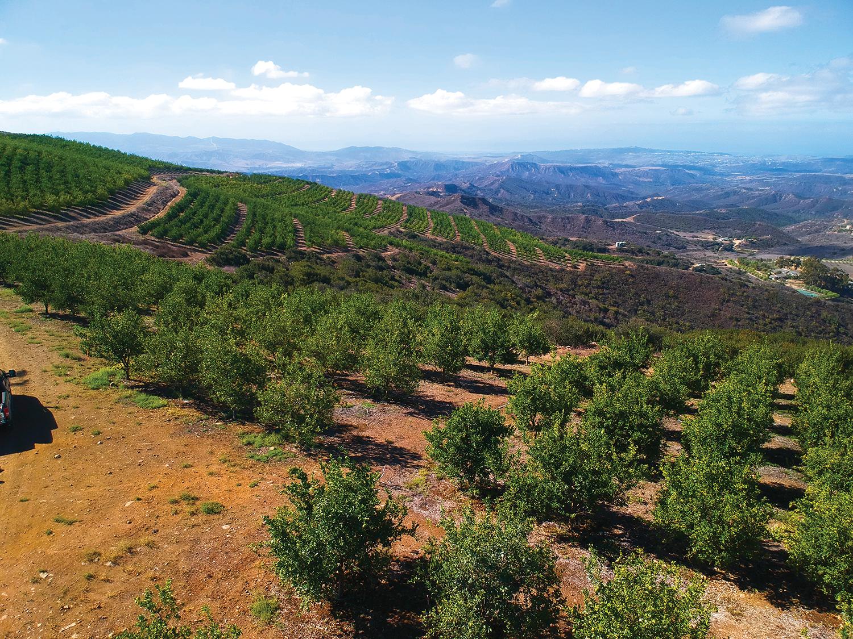 Liv Organic Field