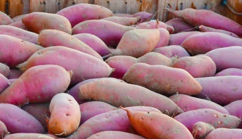 Dovera sweet potatoes